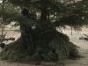 Der geduldige Baum
